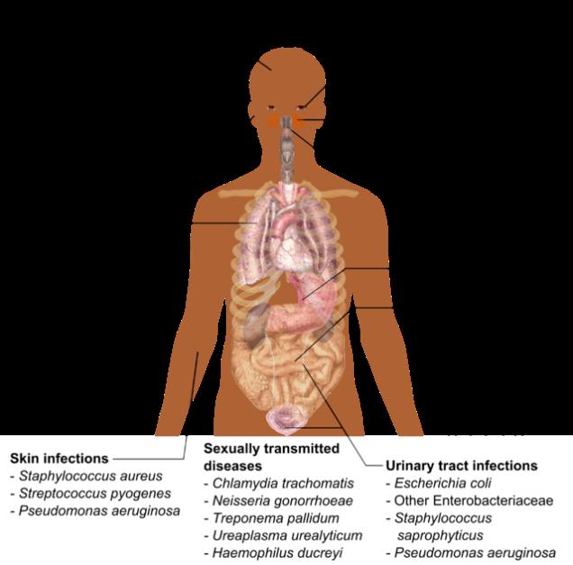 BacteriaPathogen.png