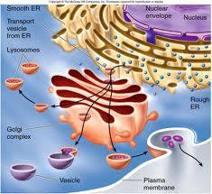 cellendomembrane.jpg