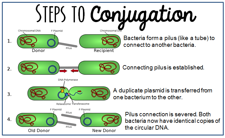 conjugation2.png