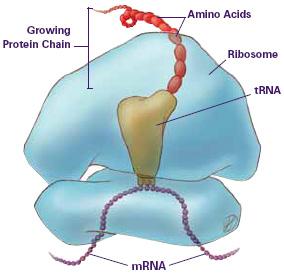 DNA3RNA.jpg