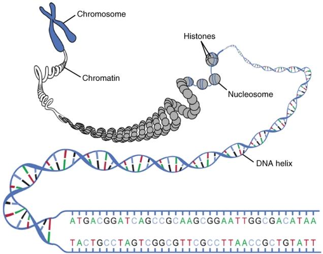 DNA_Macrostructure.jpg