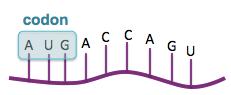 DNAmRNA