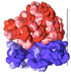 DNArRNA.png