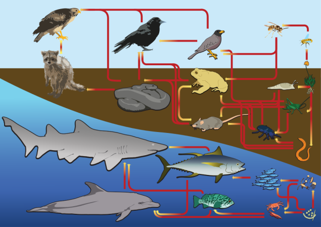 ecologyFoodweb.png