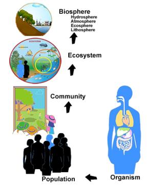 ecologyLevelsOfOrganization.png