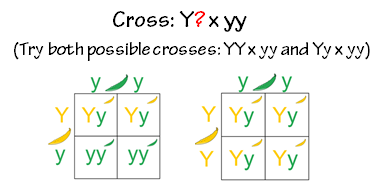 geneticstestcross.png