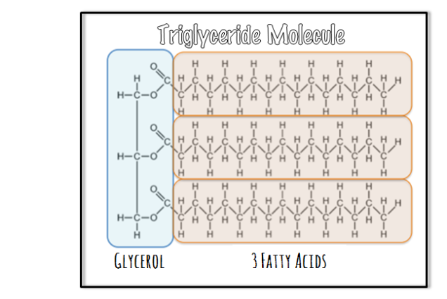 lipidstriglyceride
