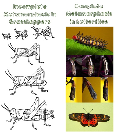 metamorphosis.png