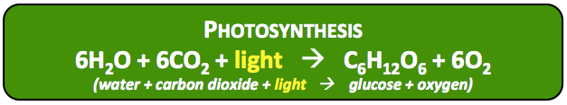 photosynthesisPsEqn