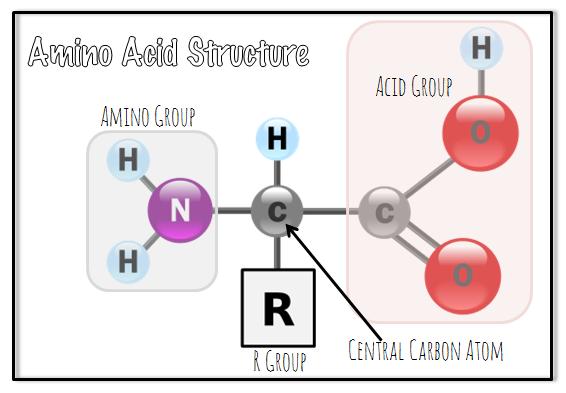 proteinsaminoAcid