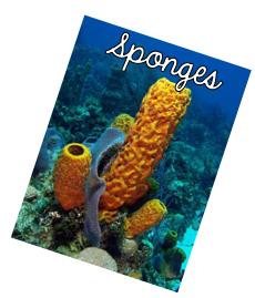 Sponges.png