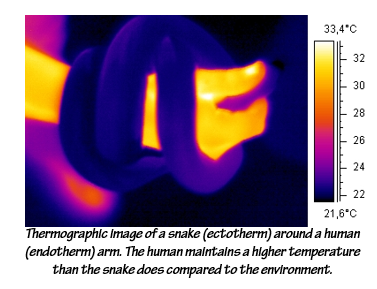 thermographic.png