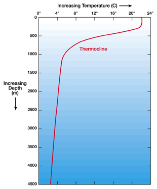 Day 41 thermocline.jpg
